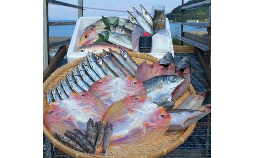 【定番!地元ならではの味】干物と鮮魚のセット