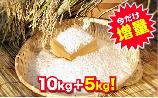 木更津産にこまる(精米)10kg+5kgサービス!