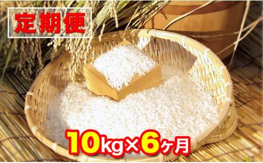 【定期便・計6回】木更津産にこまる(精米)10kg