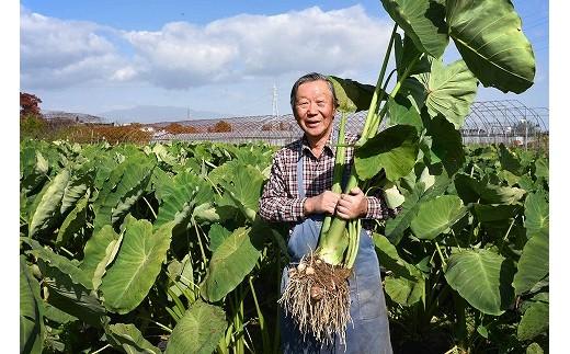土の中の子姫芋は、寒くなるほどどんどん栄養とおいしさを蓄えていきます。今年も一番おいしい時期を見計らって掘り出しました!