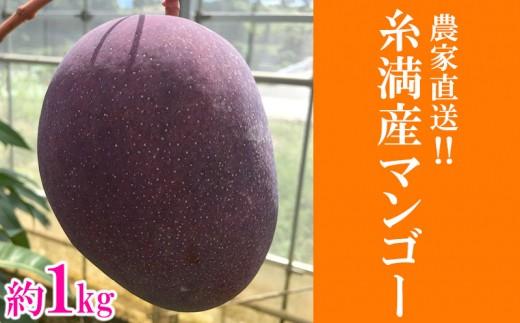 【2019年発送】農家直送!! 糸満産マンゴー 1kg(2玉~3玉)