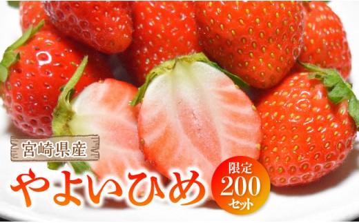 i3602高級イチゴ『やよいひめ』