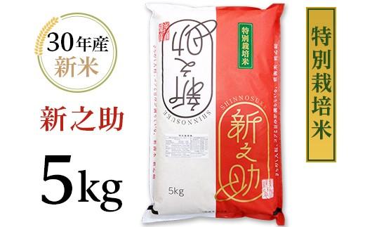 【H30年産】新潟県長岡産新之助5kg(特別栽培米)