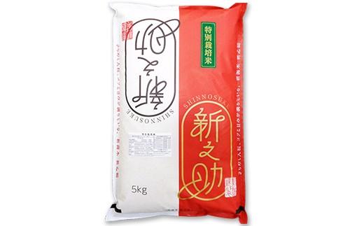 【H30年産】新潟県長岡産「新之助」5kg(特別栽培米)