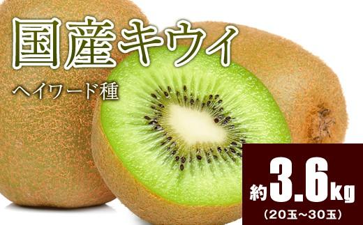 B825 【国産】フレッシュキウイ(ヘイワード) 約3.6kg