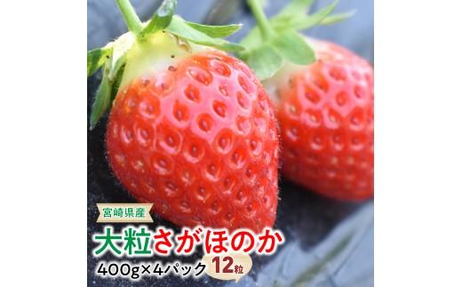 i4602宮崎県産大粒さがほのか