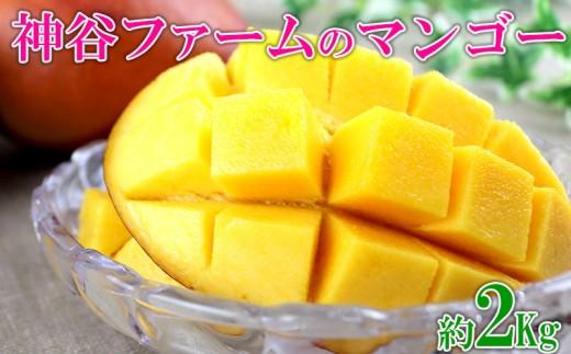 【2019年発送】神谷ファームのマンゴー約2Kg(4~7玉)