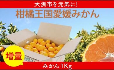 【増量】柑橘王国愛媛産温州みかん【南柑20号】約9kgプラス1Kg増量~まごころ手選り手詰め