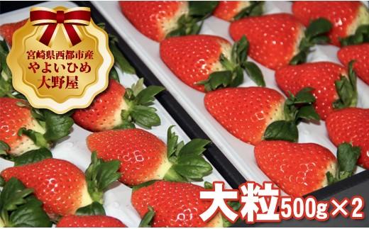 1.5-20 【個数限定】宮崎県西都市 苺大野屋 やよいひめ 大粒