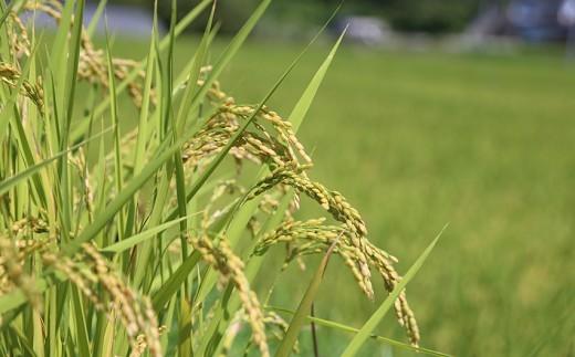 南関町のお米を100%使用