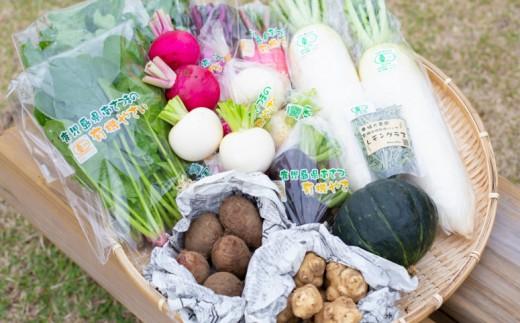 【鹿児島県南さつま市産】福元農園の旬の有機野菜セット