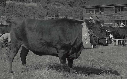 明治の初め、当地で教鞭をとったヘンリー・ダラスが帰任する際、本町の牛1頭を横浜に引き連れ帰ったのがきっかけと言われています。