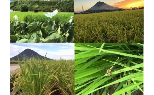 お米と里芋(夏)白鷺/夕陽と稲刈り/稲穂/トンボと稲