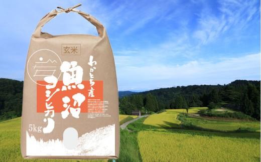 日本一のブランド米「魚沼産コシヒカリ」玄米