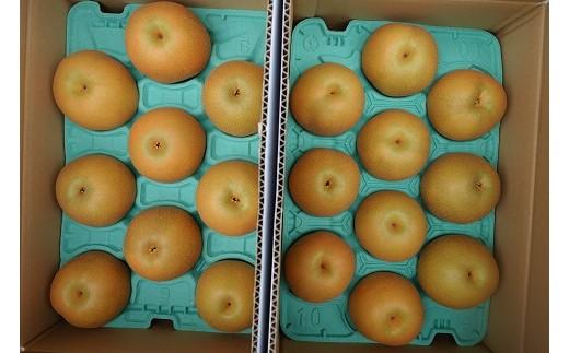 梨の大きさにより数量が変わりますが、合計で約5kgとなります。