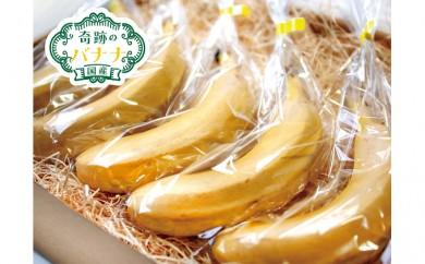 [№5904-0188]皮ごと食べられる国産無農薬バナナ「奇跡のバナナ」