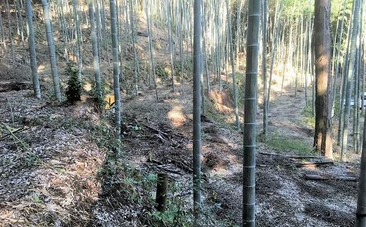 竹林を適度に間伐することで、地面まで日光が届きタケノコの成長を促します。