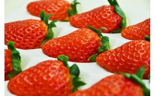 大粒イチゴ同士が配送時に接触しないよう大粒のイチゴを一粒ずつ分けた「ゆりかーご」に入れてお送りします。