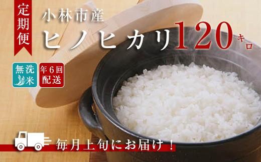 【定期便】小林産ひのひかり無洗米(10kg×12回) 31-NB12