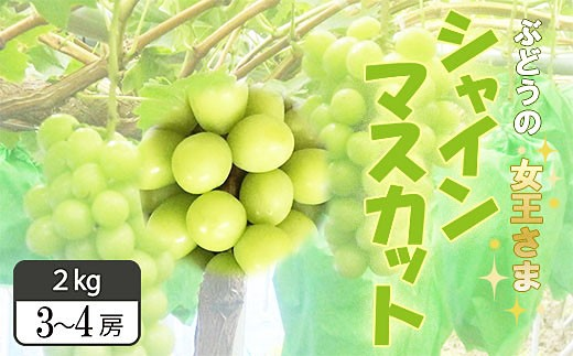 FY18-866【先行予約】山形産 シャインマスカット 2㎏(3~4房)