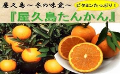 冬の味覚『屋久島たんかん』を食べやすい量3㎏でお届けします。