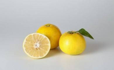 [№5772-0200]グレープフルーツ4kg(農薬:栽培期間中不使用)