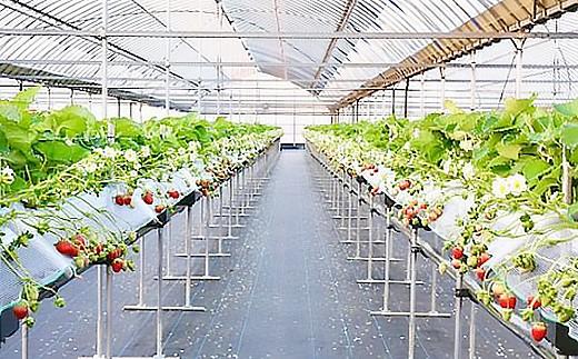 たい肥等を使った【土づくり】、県基準から30%減らした【減農薬】【減化学肥料】。大切に育てています。