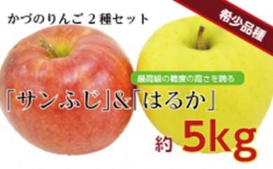 [№5764-0404]りんご「サンふじ」と「はるか」の詰め合わせ約5kg<クレカ限定>