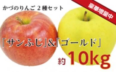 [№5764-0405]りんご「サンふじ」と「ゴールド」の詰め合わせ約10kg
