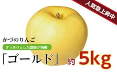 [№5764-0407]りんご「ゴールド」約5kg