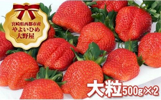 【先行予約】宮崎県西都市 苺 大野屋 厳選大粒 やよいひめ ダブル(2P)<2-27>
