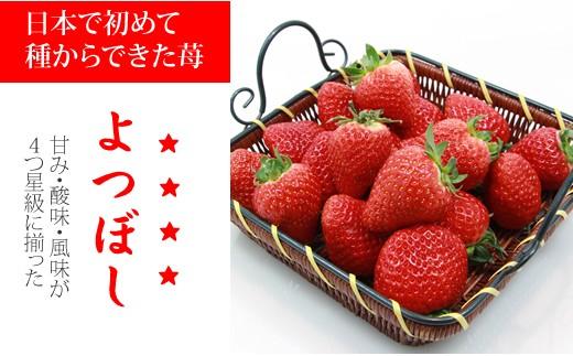 B10-104 甘み・酸味・風味が四つ星級のイチゴ「よつぼし」