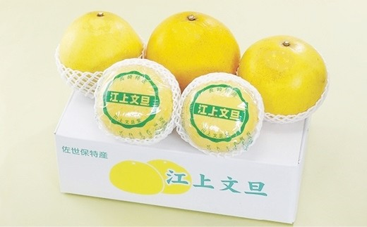 T137 香り高く紅い果肉の郷土柑橘「江上文旦」【400pt】
