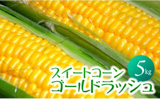 i3903「井上農園」朝もぎ直送スイートコーン(ゴールドラッシュ)×1箱