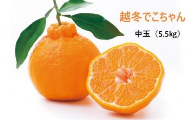 [№5532-0145]越冬でこちゃん(中玉約5.5kg)◆クレジット限定