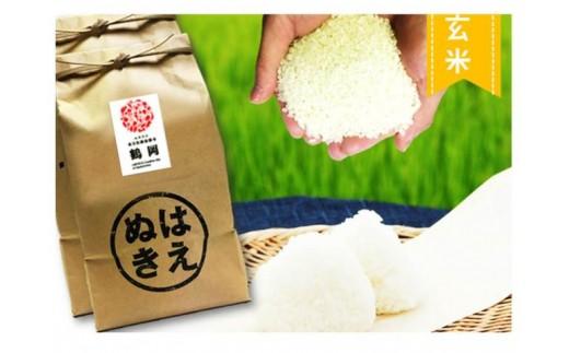 A51-003 特別栽培米はえぬき玄米(10kg)