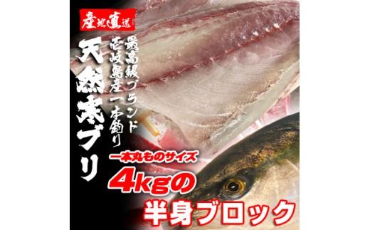 B061-05壱岐島産天然寒ブリ(一本丸ものサイズ4キロ台の半身ブロック)  8,100pt