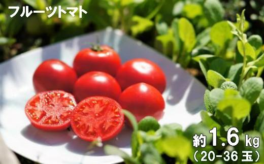 フルーツトマト 約1.6㎏(20‐36玉)[A-36.