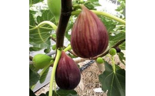 化学合成農薬や化学肥料を使わない栽培方法を実践