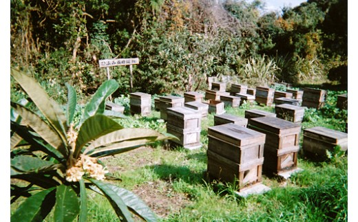 自然豊かな南房総エリアに点在する養蜂場