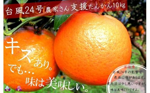 532【災害支援】少しキズは多いですが、味は美味しい徳之島のたんかん(家庭用10kg)
