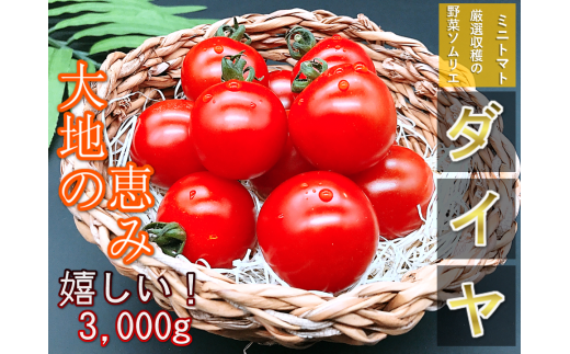 G8 ソムリエミニトマト・ダイヤ(3kg)