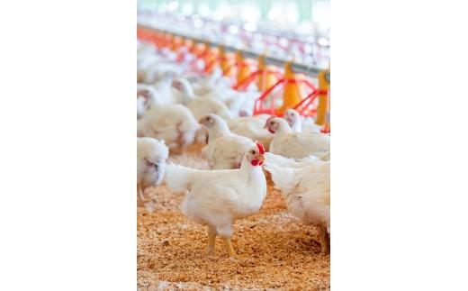 自然の光と風が入る開放型鶏舎で残留農薬の心配のない植物性主体の飼料で育てています。