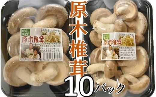 原木椎茸まさに木の子10パック