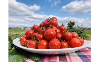 笑顔のトマト