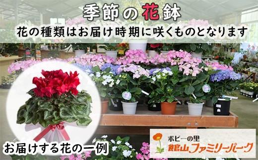 お届け時期に咲く季節の花鉢です。何が届くかはお楽しみに! ※写真はイメージです