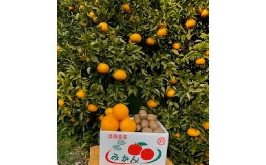 片山農園の淡路島産新甘夏2.5kgとキウイ2.0kg【サイズいろいろS~2Lサイズ】【発送時期2月頃~5月頃】