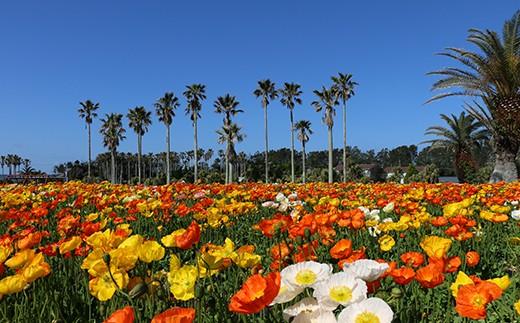 【010-001】館山季節の花