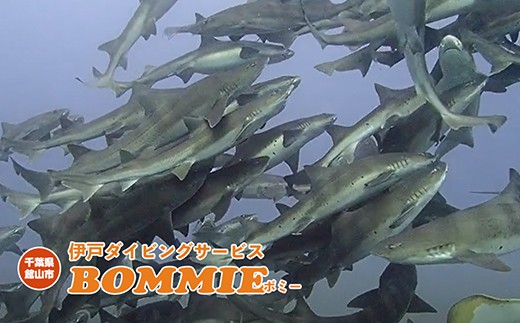館山市伊戸の海でしか見ることができない光景です。
