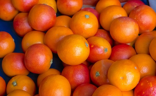 イタリア地中海、シチリア原産のブラッドオレンジ